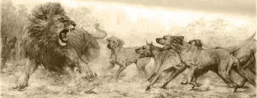 Lion dogs and Lion